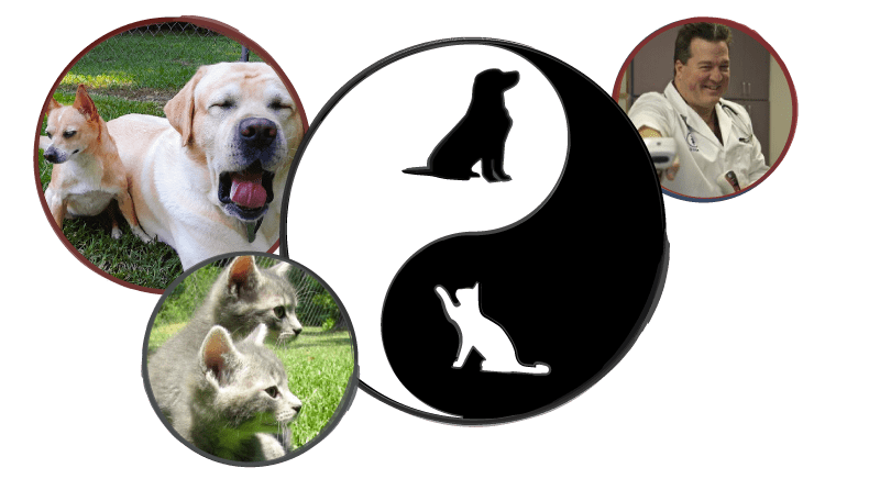 Holistic Cat and Dog Care